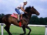 Sports - Equitation - 001