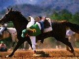Sports - Equitation - 002