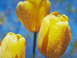 Fleurs - 001
