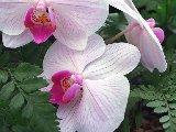 Fleurs - 002