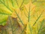 Paysages - Vegetation - 061