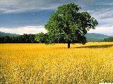 Paysages - Vegetation - 080
